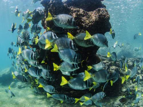 GALAPAGOS CRUISE [LATE DEALS GALAPAGOS TOURS]: submerge a little and enjoy the colorful tropical fishes.