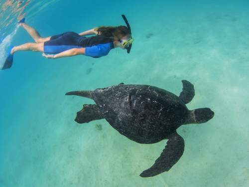 GALAPAGOS CRUISE [LATE DEALS GALAPAGOS TOURS]: Enjoy the underwater world.